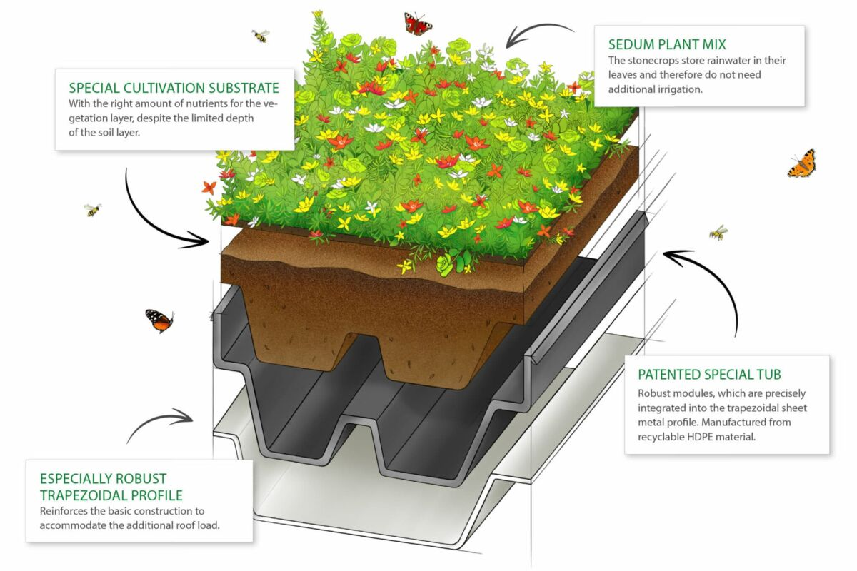 A cross-section of the Green+ green roof system